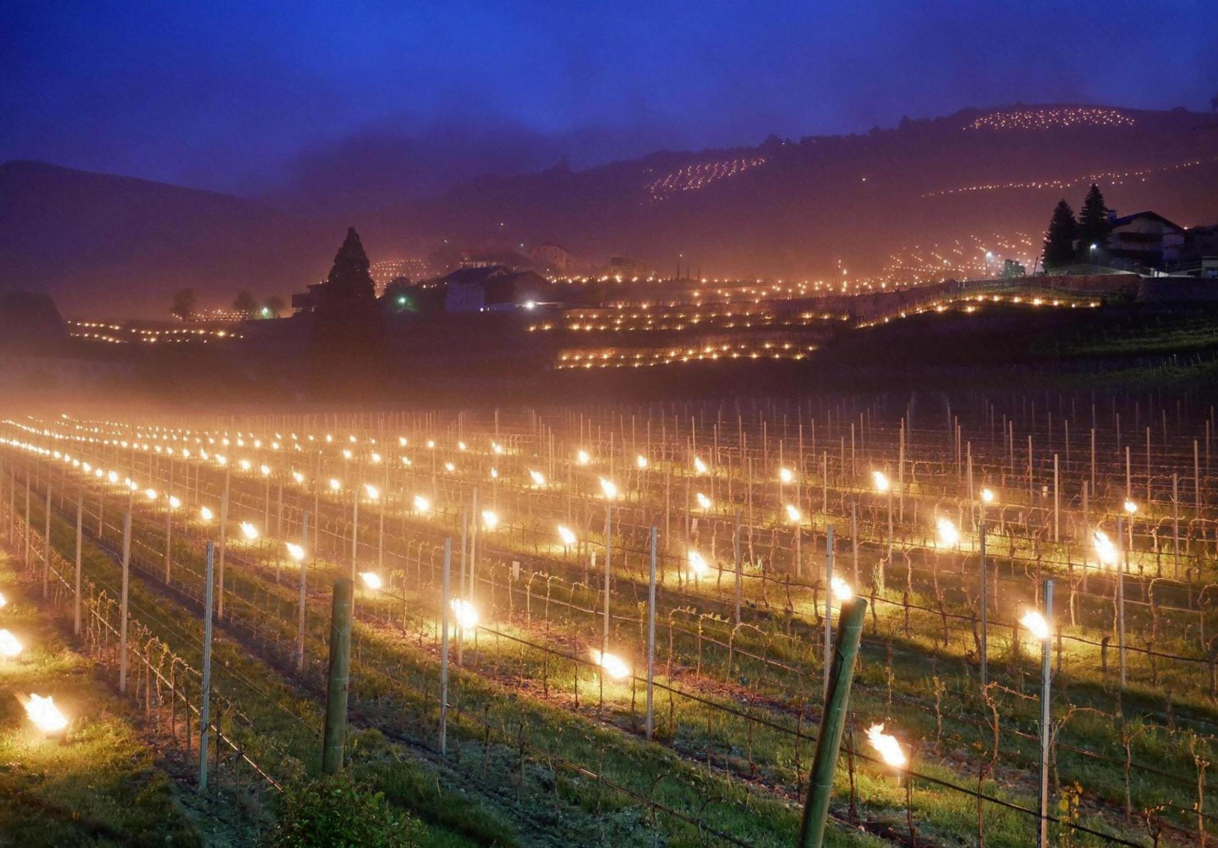 Trentino: candele per scaldare vigneti e coltivazioni