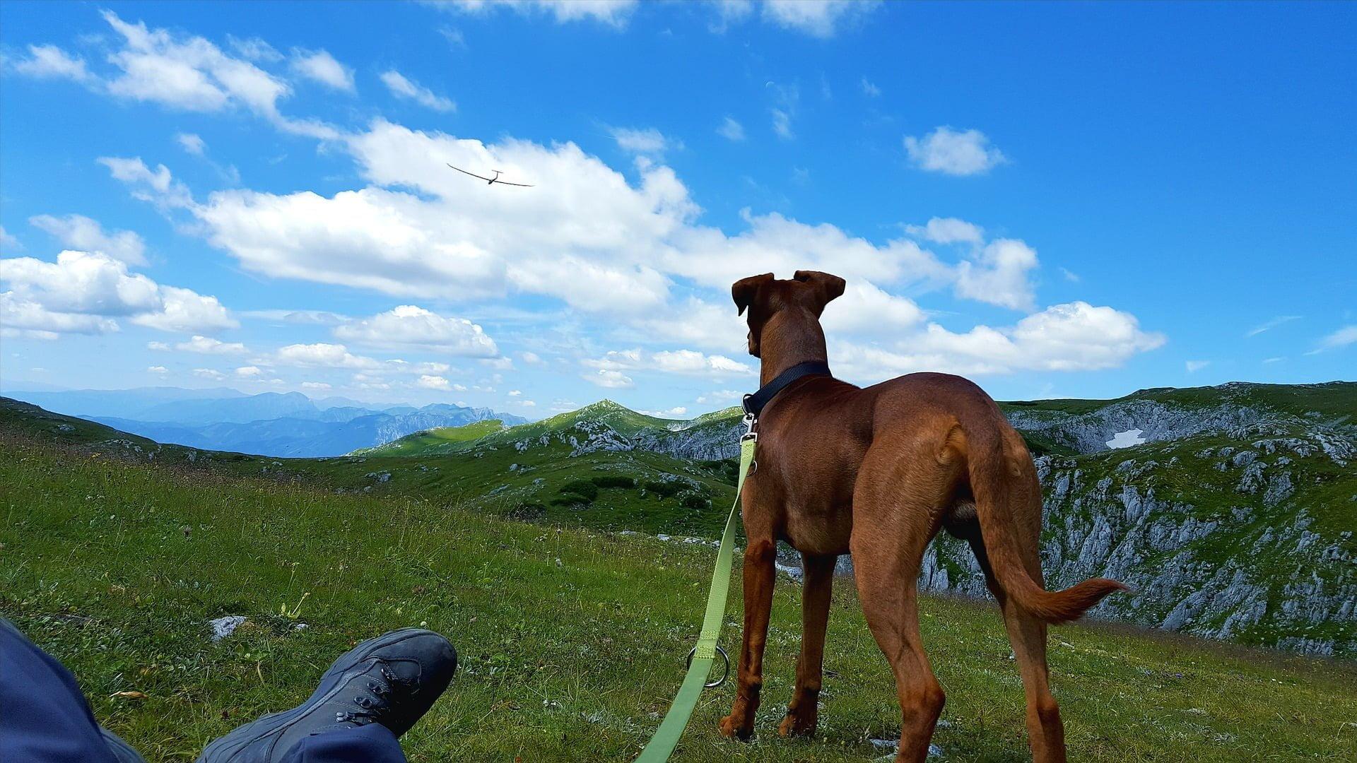 Vacanze a 6 zampe sulle Dolomiti: passeggiate da fare con i cani