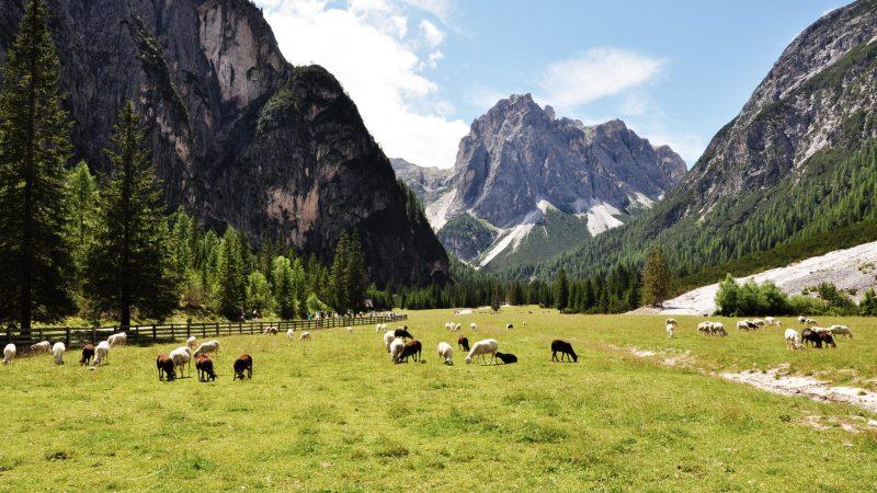 Escursione per famiglie al Rifugio Tre Scarperi – Dreischusterhütte