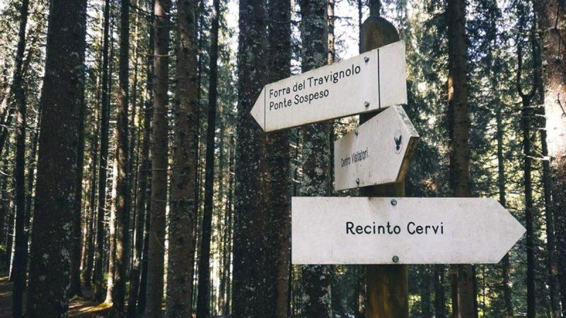 Alla scoperta del Parco Naturale Paneveggio – Pale di San Martino